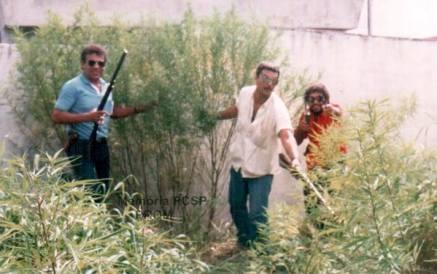 Plantação de Maconha encontrada na cidade de Osasco pelo Investigador de Polícia Osvaldo Jose Dos Santos e equipe, em 1.986.